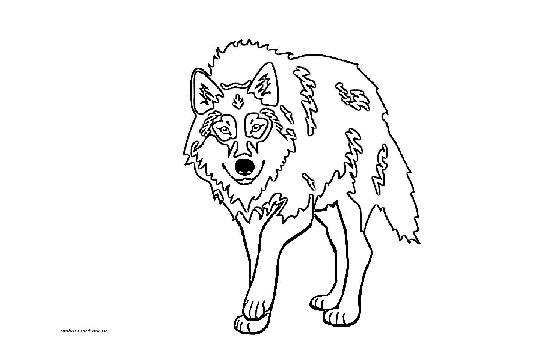 Раскраски волка для детей - Раскрась этот мир!