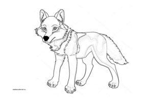 Раскраска волка