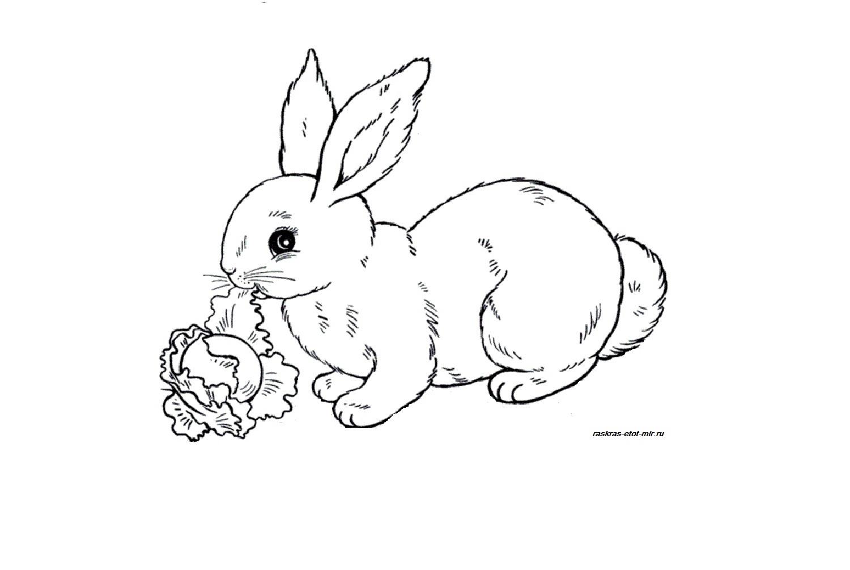 Раскраски зайчика - Раскрась этот мир!
