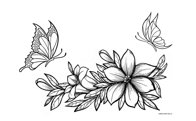 Раскраски цветы и бабочки - Раскрась этот мир!