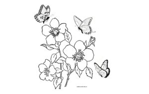 Цветы и бабочки