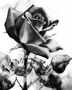 Черно-белая картинка розы